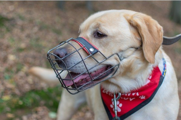 Control your pet effectively with dog muzzles and leashes